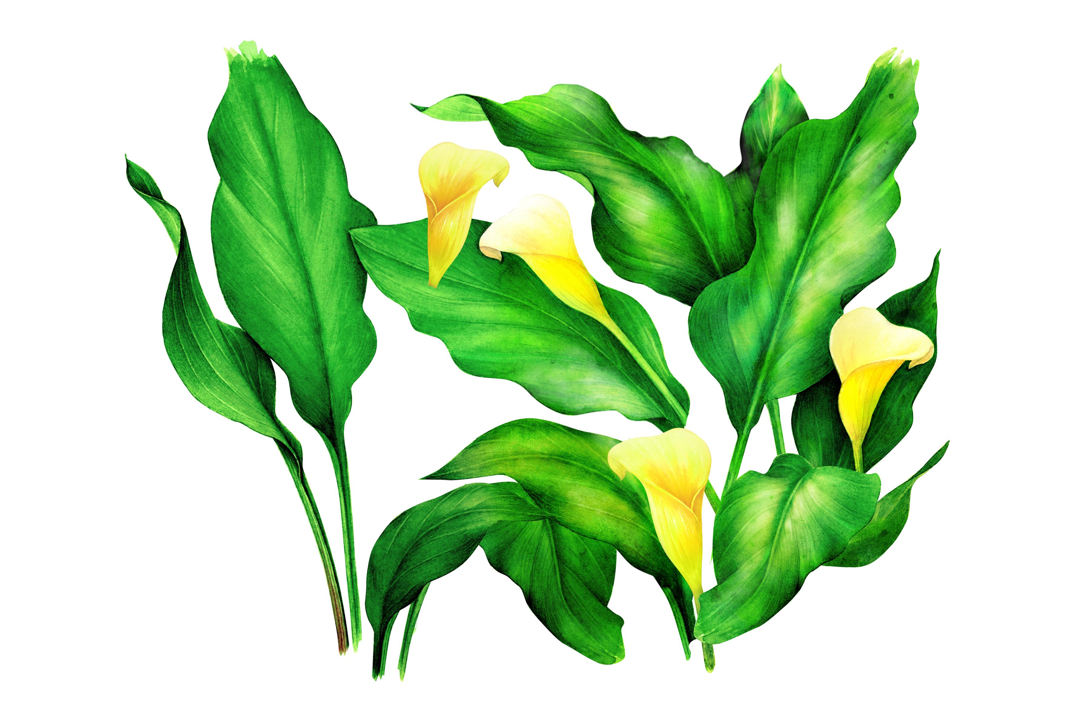 Caress Botanicals slider image 05